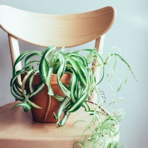 Find the best house plants for those with allergies! These plants actually help to clean the air!