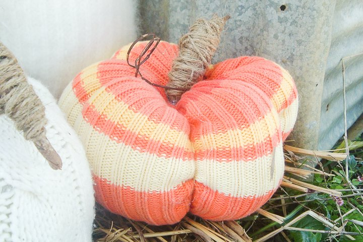 striped sweater pumpkins