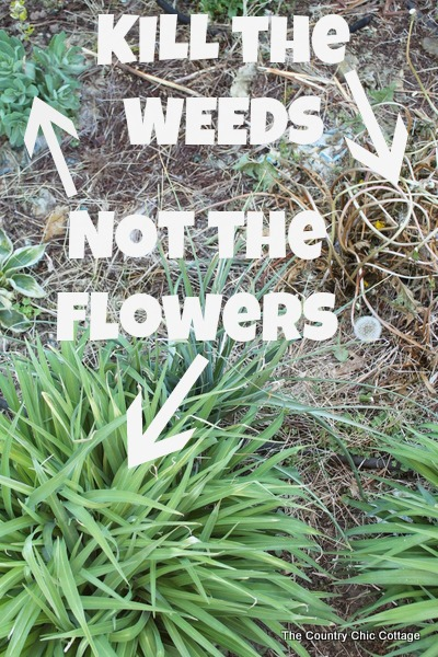 kill grass and weeds but not flowers