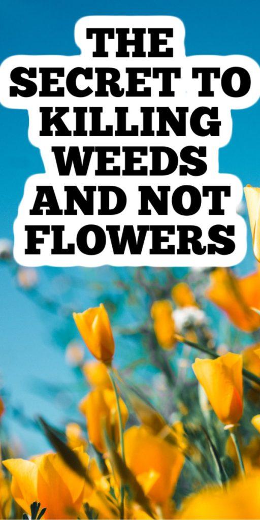 secret to killing weeds