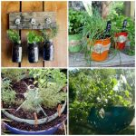 Planting Herbs: Ideas for Growing Herbs in Your Spring Garden