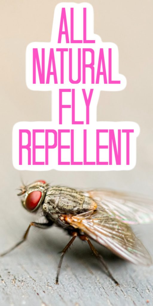 Give these natural solutions a try around your home to repel the flies outdoors or inside! #flies #bugs #summer
