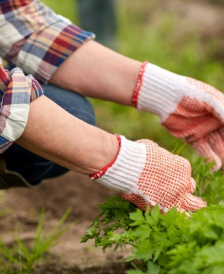 Learn the best ways to kill weeds in your flowerbeds, gardens, grass, and more!