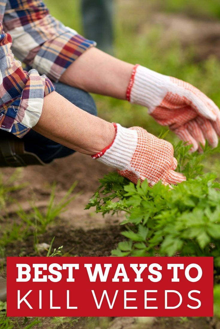 Learn the best way to kill weeds in your flowerbeds, gardens, grass, and more!