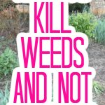 Spray this in your flower beds to kill weeds but leave the flowers alone! Your gardening will be so much easier with this product! #garden #gardening #flowers #flowerbeds #killweeds
