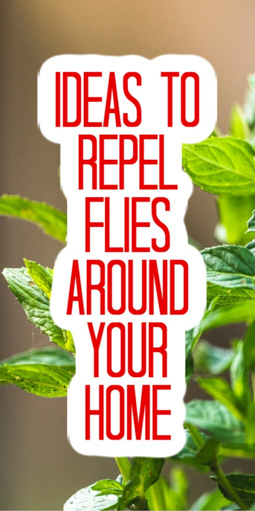 repel flies around your home