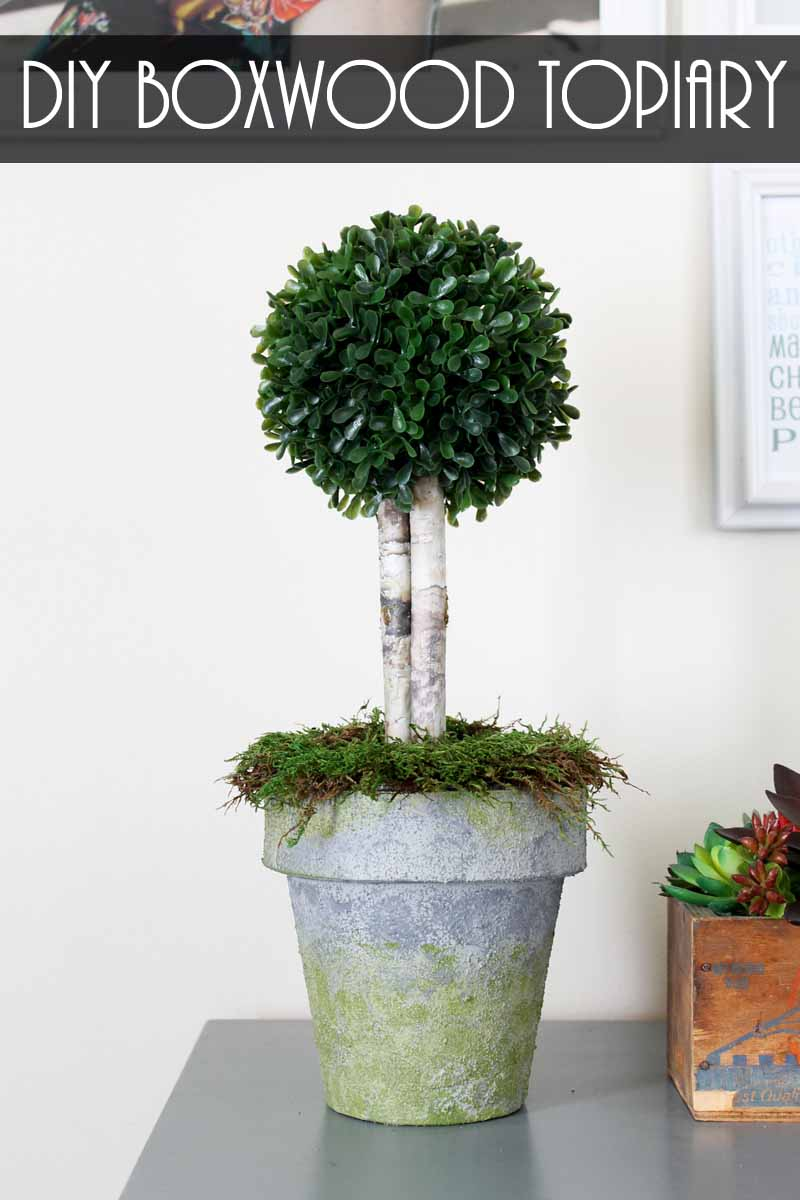Boxwood Topiary In A Faux Concrete Pot The Country Chic Cottage