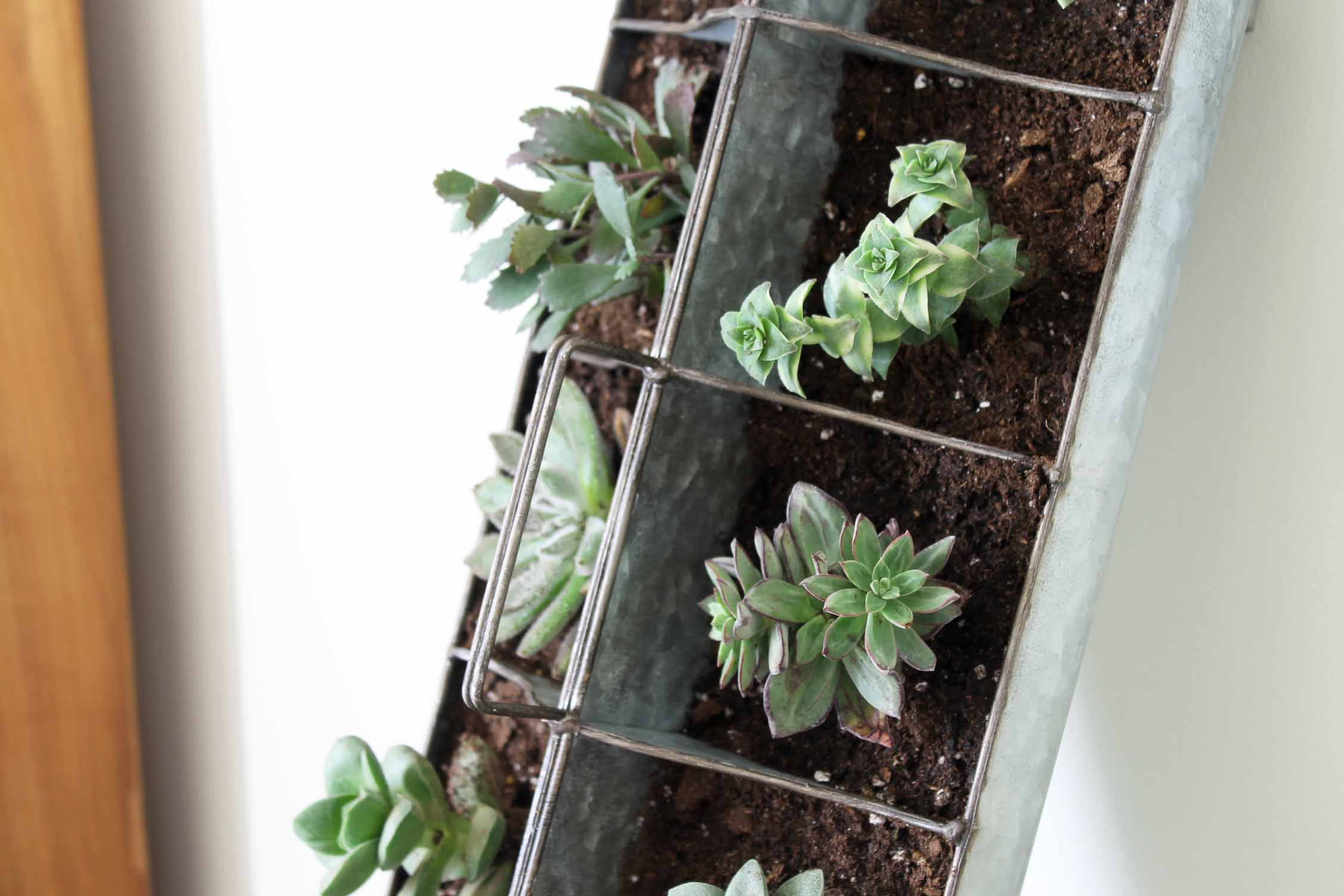 Indoor succulent garden in minutes the country chic cottage for How to make an indoor succulent garden