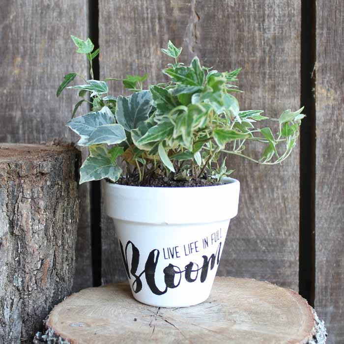Create your own perfect painted flower pot using Chalk Couture paint with this easy tutorial