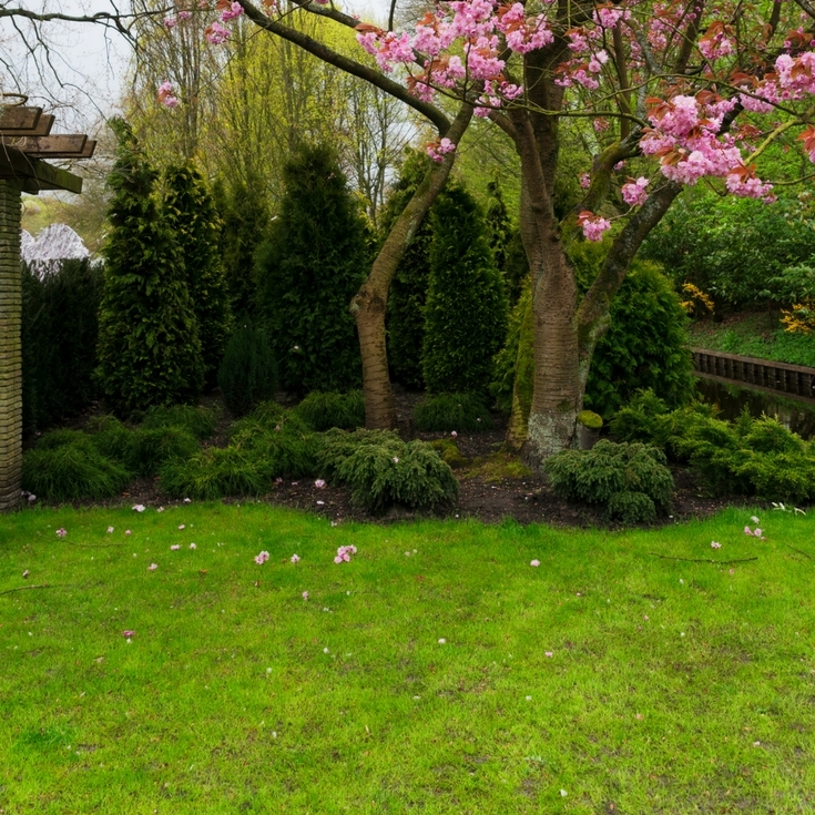 Spring Lawn Care: The tips and tricks you need for the perfect yard this summer!