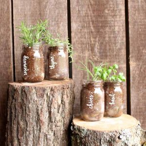 Make a garden in a jar! A fun way to grow herbs this summer! Includes file to cut vinyl on your Cricut for labels!