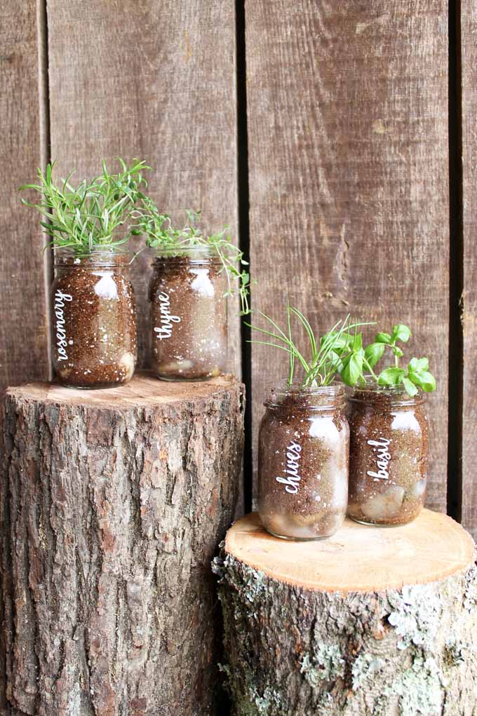 vinyl words on jars with herbs planted in them