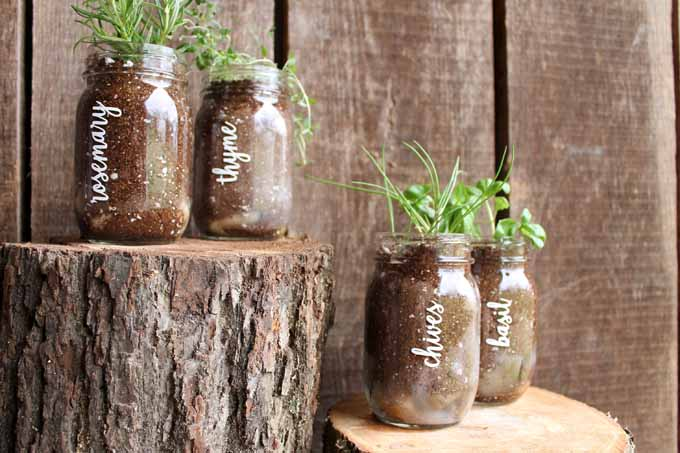 garden in a jar made with a cricut machine