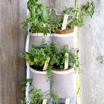 Hanging Herb Garden:  DIY Guide and Benefits
