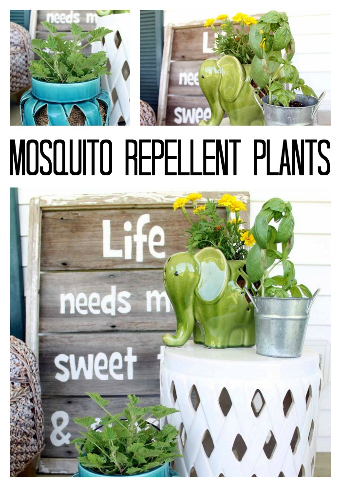 Add these natural mosquito repellent plants to your home and garden this summer! Who doesn't want to repel bugs naturally with their landscape choices?