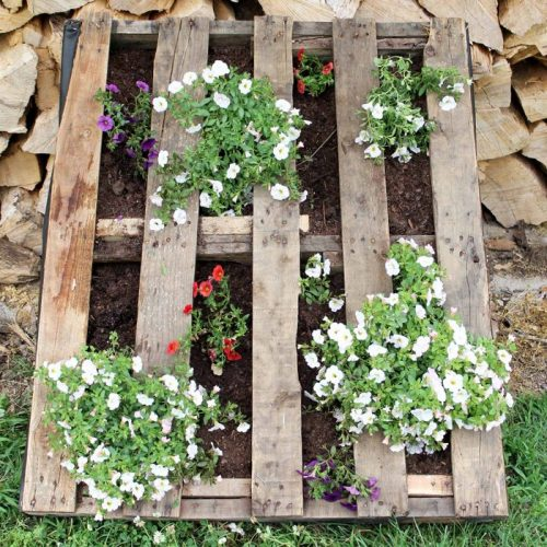 pallet with flowers planted inside