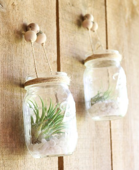 air plants in mason jars