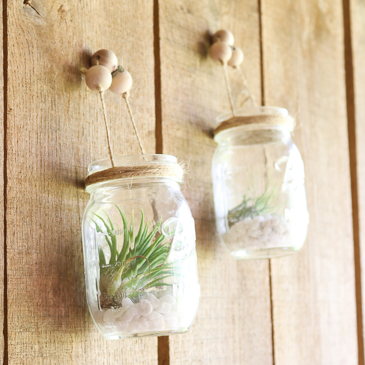 air plants in mason jars