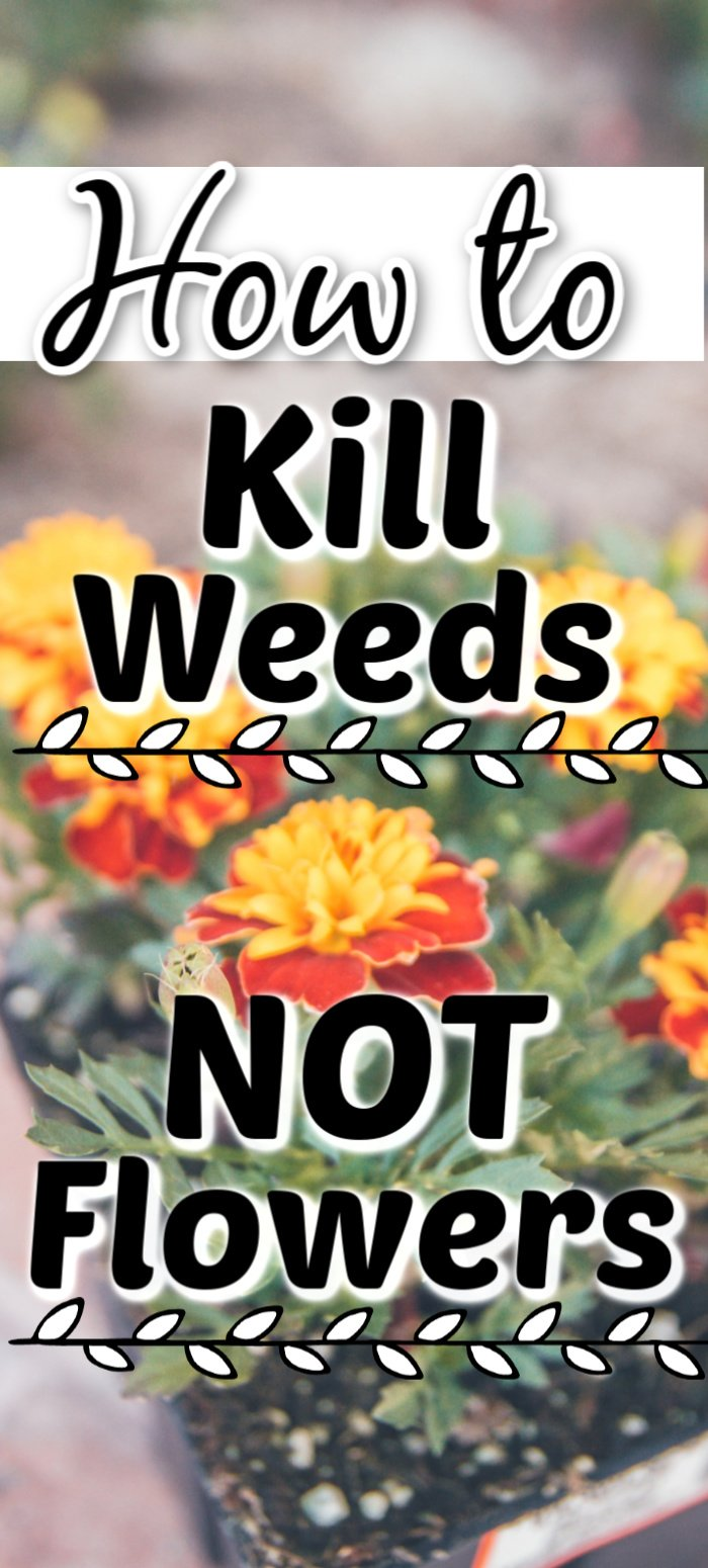 Kill weeds NOT flowers. See this amazing product in action that can be used in your flower bed to kill weeds but leave the flowers perfectly healthy. #garden #gardening #weeds #spring #summer #flowers #flowerbed