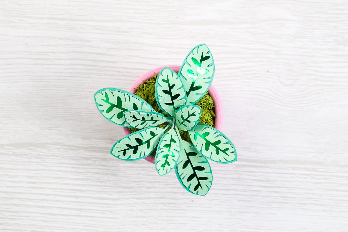 lily paper plant