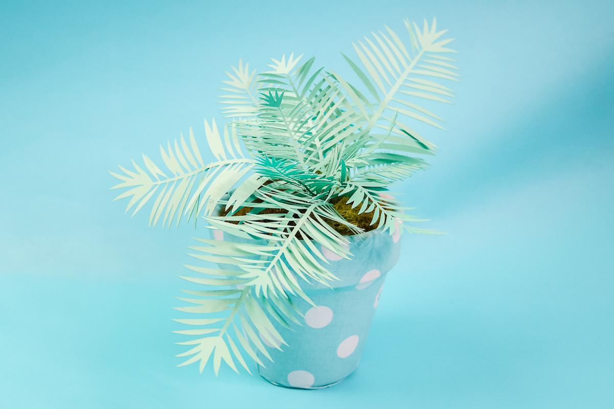 how to make a palm plant