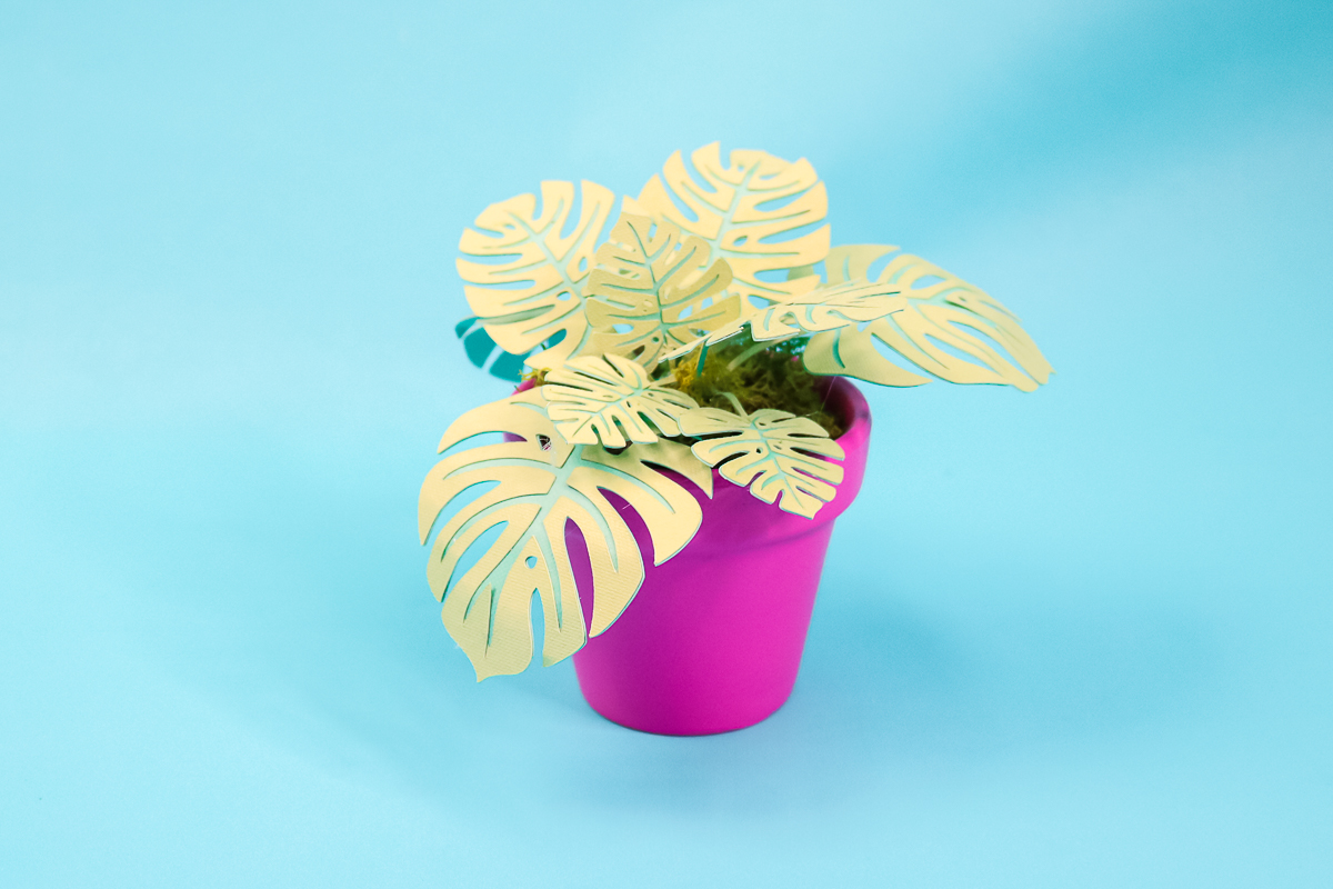 how to make a monstera plant